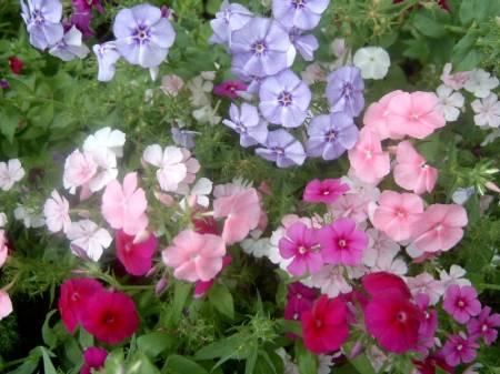 Super imagenes - Fotos flores preciosas ...