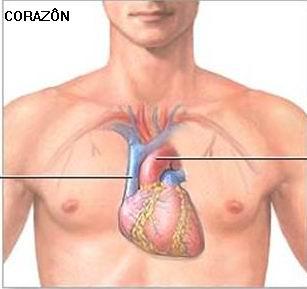 Los 5 organos y su funcion psicologica energy beauty for En k parte del cuerpo esta el higado