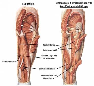 anatomiahumana