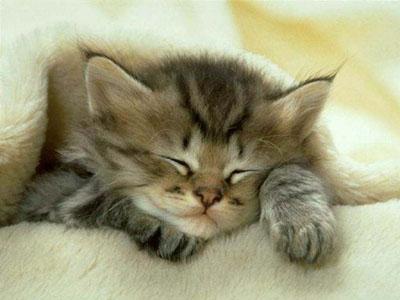 Gatos bonitos Aakatze3